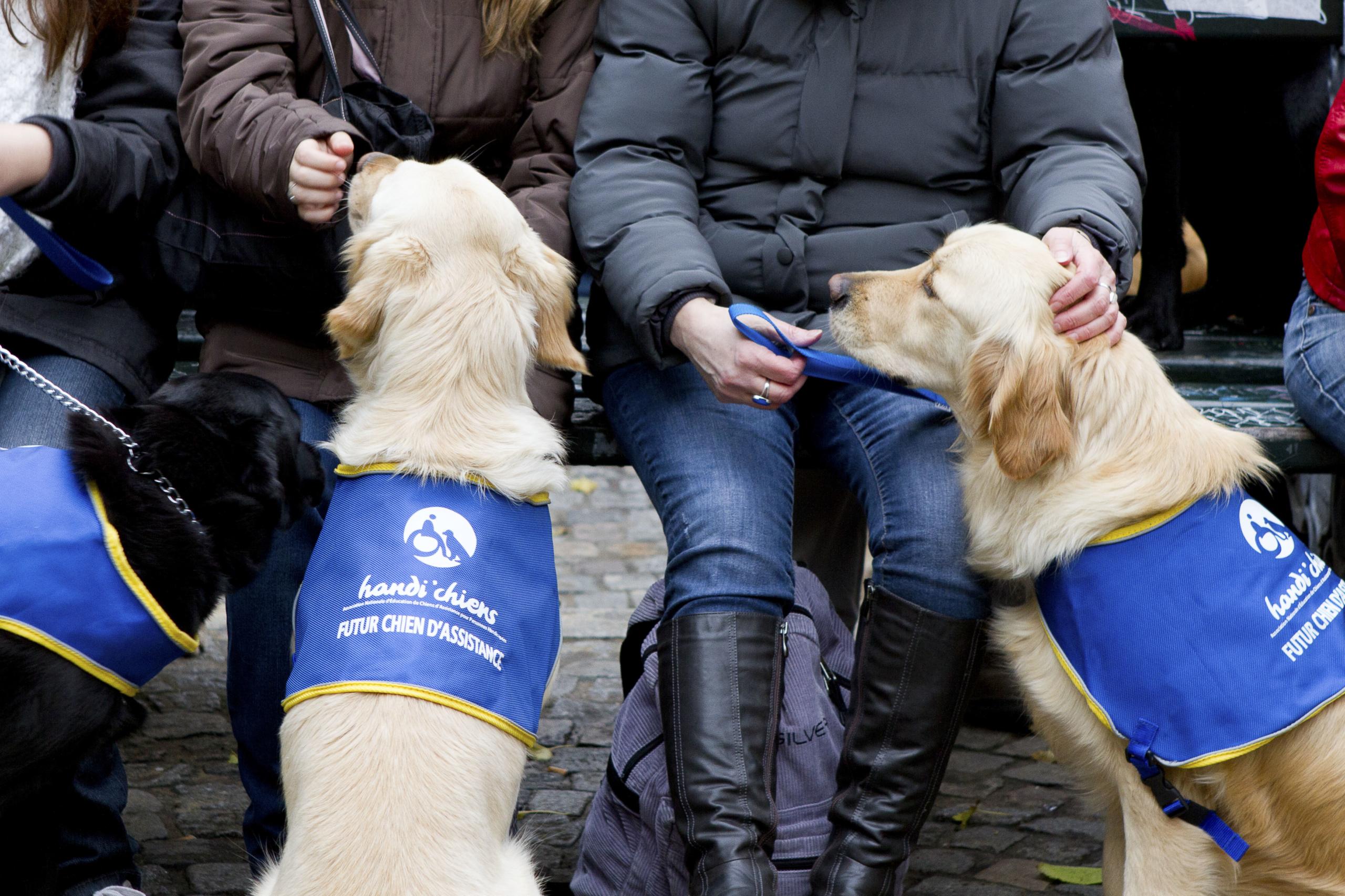 Les Handi'chiens à Paris au Téléthon